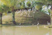 Fasilitas Objek Wisata Jambi Paradise