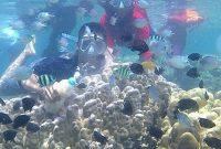 Snorkeling Pantai Sari Ringgung Lampung