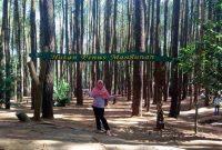 Alamat Hutan Pinus Mangunan Jogja