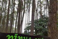 Harga Tiket Masuk Hutan Pinus Asri Jogja