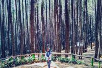 Jalan Menuju Hutan Pinus Asri Jogja