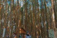 Jalan Menuju Hutan Pinus Mangunan Jogja
