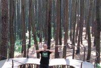 Panorama Hutan Pinus Asri Jogja