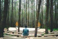 Spot Foto Hutan Pinus Mangunan Jogja