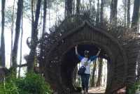 Spot Foto Hutan Pinus Pengger Jogja