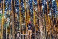 Wahana Foto Hutan Pinus Asri Jogja