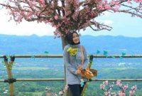 Bunga Sakura Bukit Bintang Bogor Leuwiliang