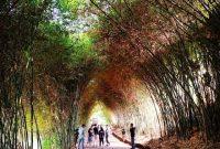 Jalan Menuju Dusun Bambu Lembang Bandung