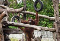 Jam Buka Gembira Loka Zoo Jogja