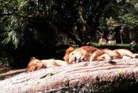 Jam Buka Taman Safari Bogor