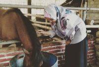 Memberi Makan Kuda Kampung Susu Dinasty Tulungagung