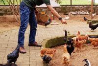 Rute Kuntum Farm Field Bogor