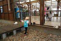 Wahana Kuntum Farm Field Bogor