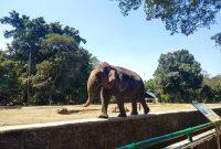 Lokasi Ragunan Zoo Jakarta