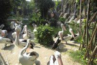 Wahana Ragunan Zoo Jakarta