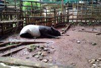 Koleksi Satwa Kebun Binatang Bandung