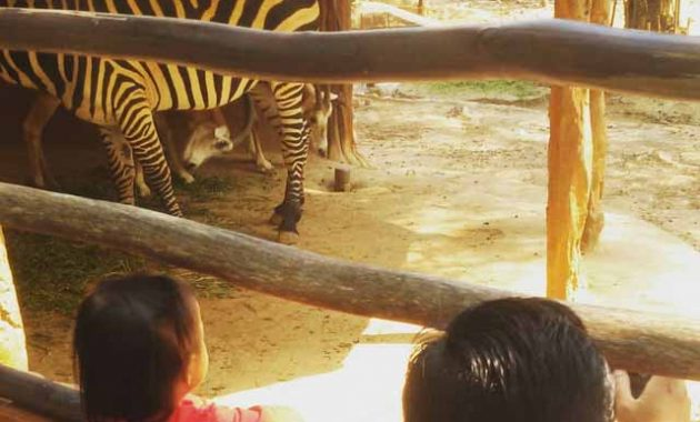Maharani Zoo Wisata Bahari Lamongan
