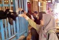 Wahana DKandang Amazing Farm Depok