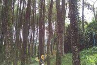 Jalan Menuju Bukit Baros Sukabumi